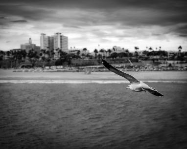 Santa Monica, California USA